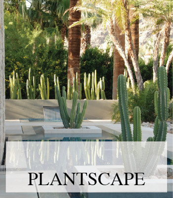 PLANT STYLING INSPIRATION FOR INTERIOR AND EXTERIOR