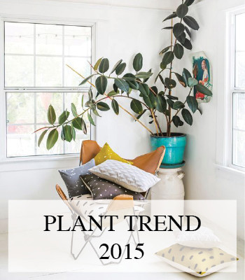 AIR CLEANING INDOOR PLANTS – 2015 INTERIOR TRENDS